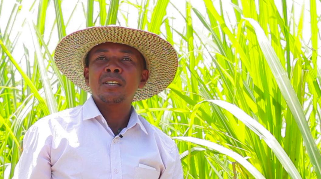 VIDEO # MADAGASCAR Produire du sucre biologique à Madagascar, Coopérative PAACO
