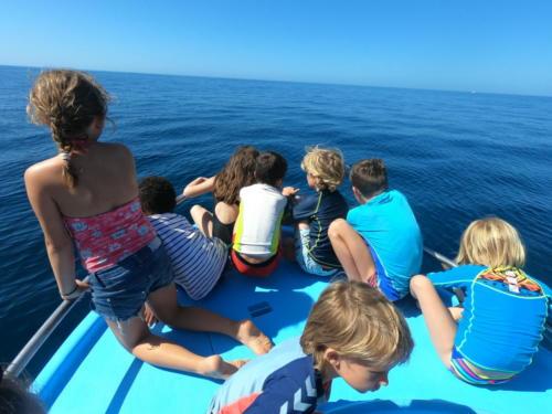 A la recherche des dauphins
