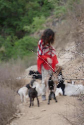 Alexa et les chèvres