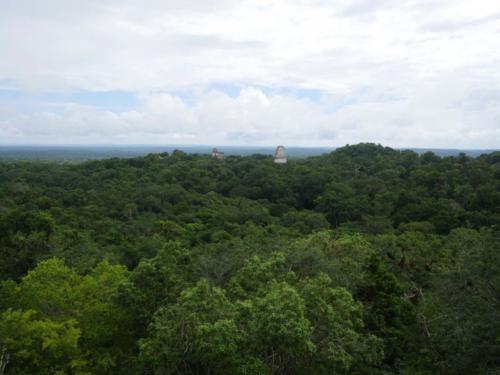 Au dessus des arbres, Tikal