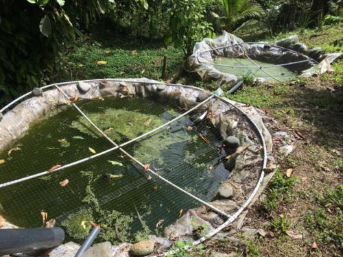 Bassins pisciculture