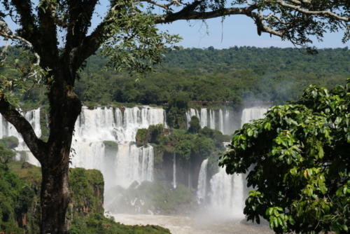 Chutes d'Iguaçu (8)