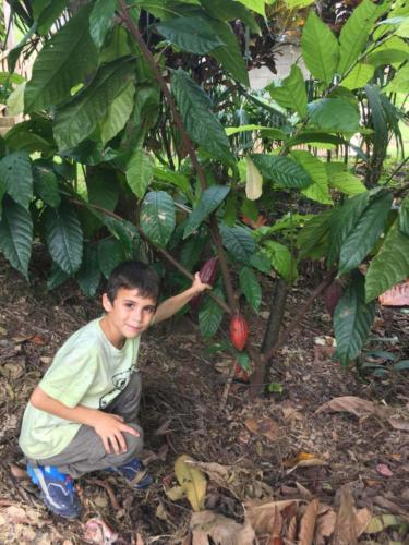 Découverte cabosses cacao, Esteban, Apodip