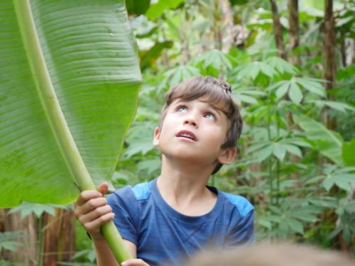 Esteban feuille banane (2)