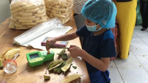 Esteban mesure le taux de sucre des bananes