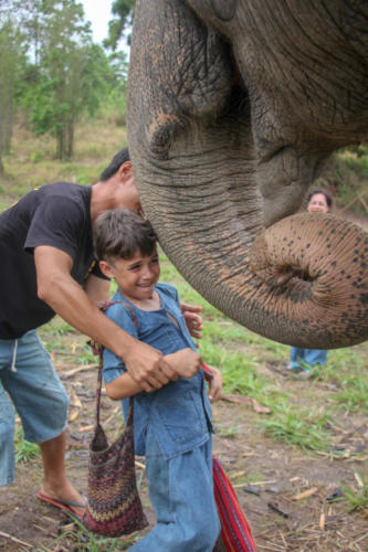 Feeding elephants (1)