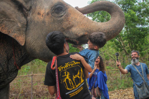 Feeding elephants (12)