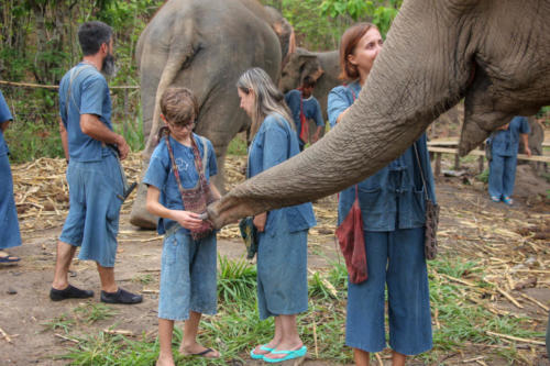 Feeding elephants (15)