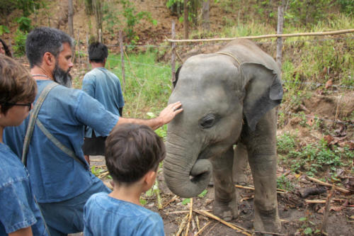 Feeding elephants (17)