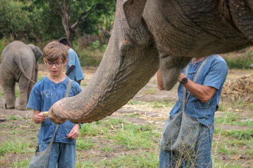 Feeding elephants (2)