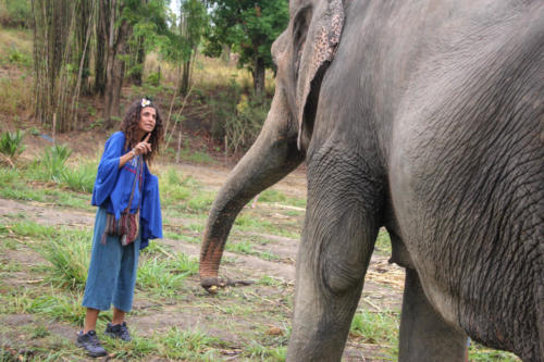 Feeding elephants (4)