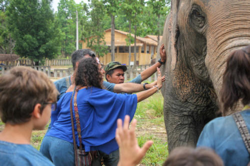 Feeding elephants (5)