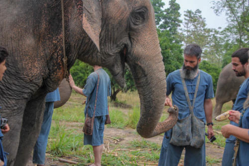 Feeding elephants (6)