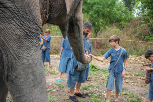 Feeding elephants (7)