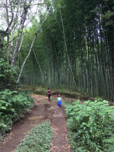 Forêt de bambou Las Canadas
