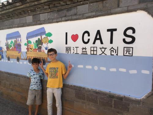 I love Cats, Lijiang
