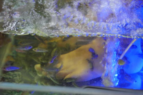 Kiss Fish Spa (5)