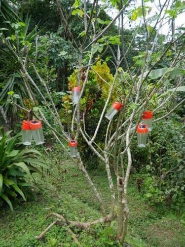 L'arbre à lampe solaire