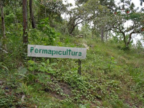 La Permapiculture selon COMSA