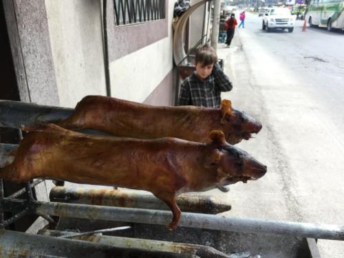 La rotisserie de cochon d'inde