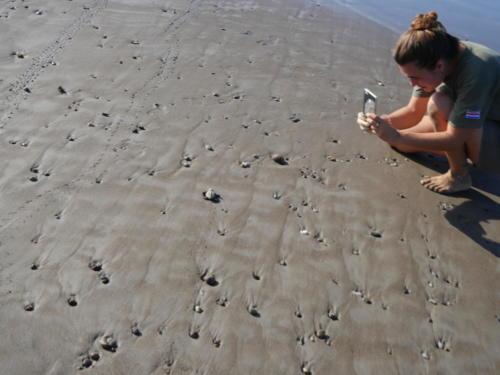 Laché bébés tortues