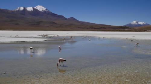 Laguna blanca (3)