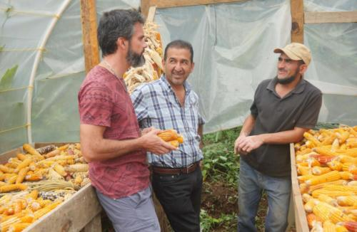 Le maïs, la base au Honduras