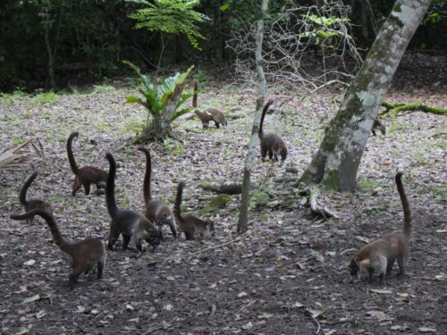 Les animaux de Tikal