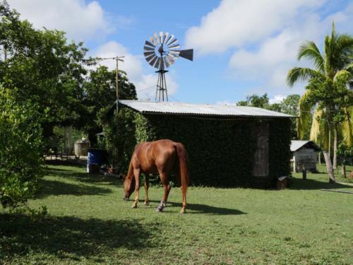 Les chevaux en liberté, Finca del medio