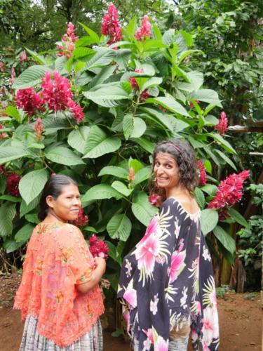Les fleurs du Guatemala, Apodip