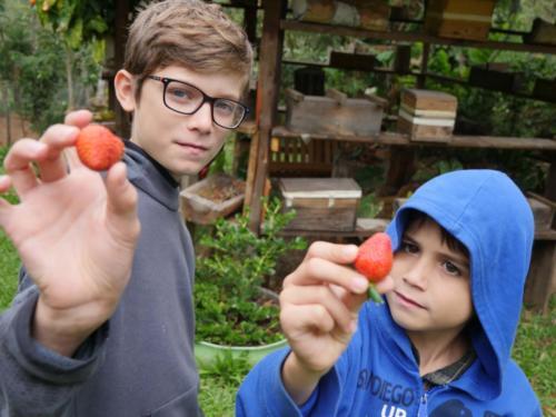 Louis & Esteban et les fraises
