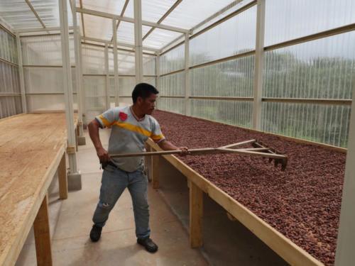 Luis sèche le cacao, Apodip