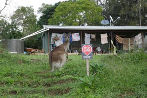 Maison Ecologique et Kangourou