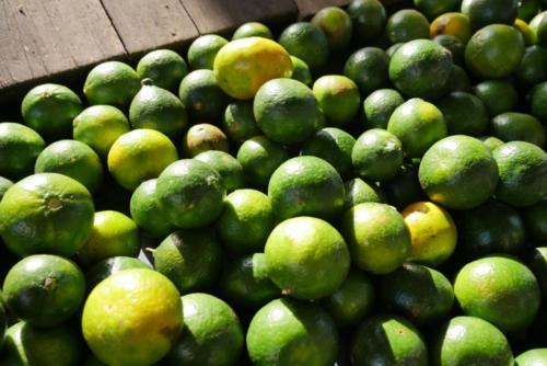 Mandarines vertes (2)