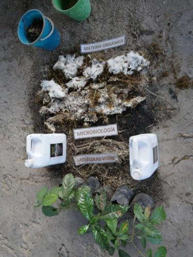 Micro organismes de la Montagne COMSA