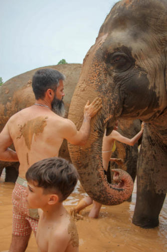 Mud bath with elephants (2)