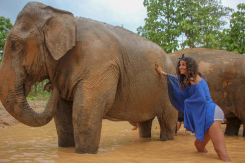Mud bath with elephants (4)