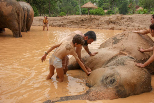 Mud bath with elephants (6)