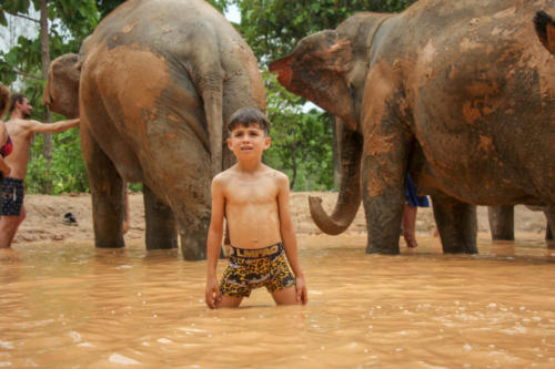 Mud bath with elephants (7)