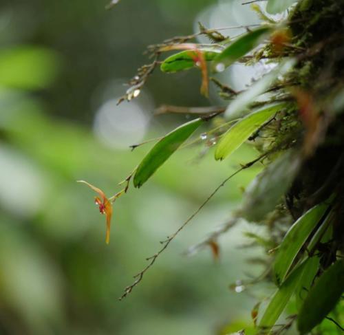 Orchidées Pital