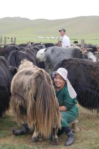 Oyuna à la traite des yacks