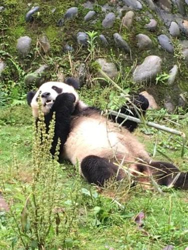 Panda base (2)