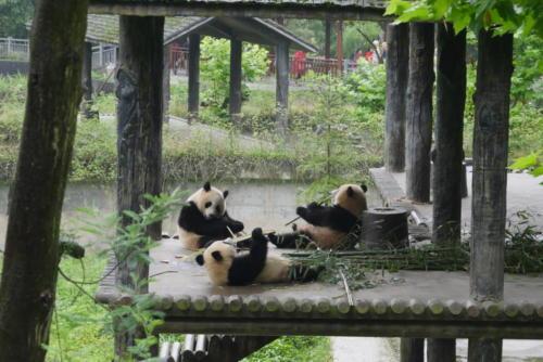 Panda base (4)