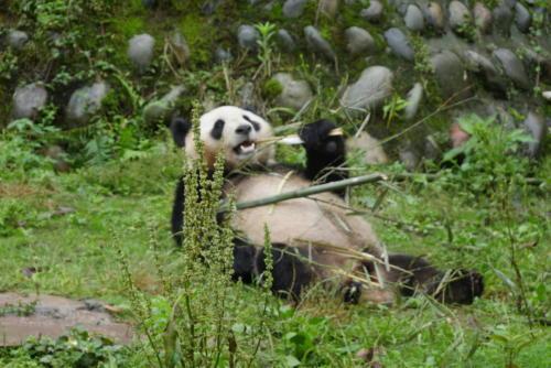 Panda base (5)