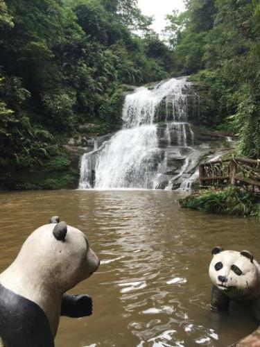 Panda cascade