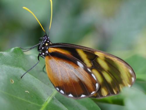 Papillon maison autonome