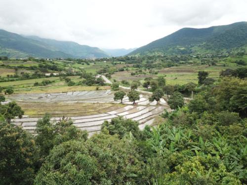 Parcelle Victor Cacao et rizières