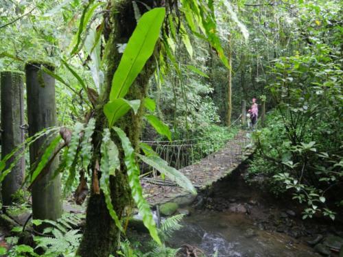 Ponts et plantes épiphytes