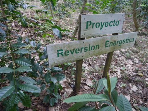 Projet sur la mémoire des plantes