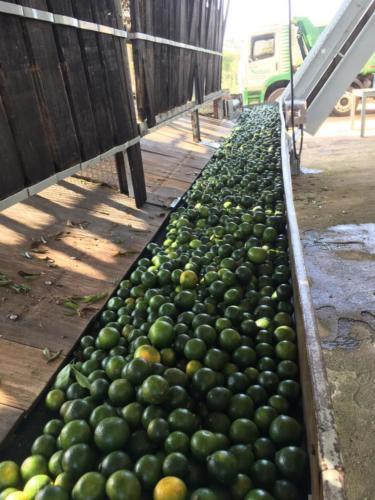 Réception des mandarines (2)